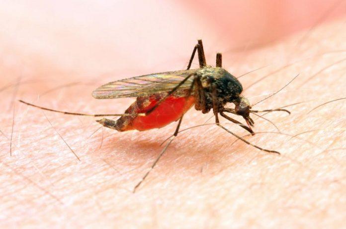 Decrease In Malaria Incidences Study
