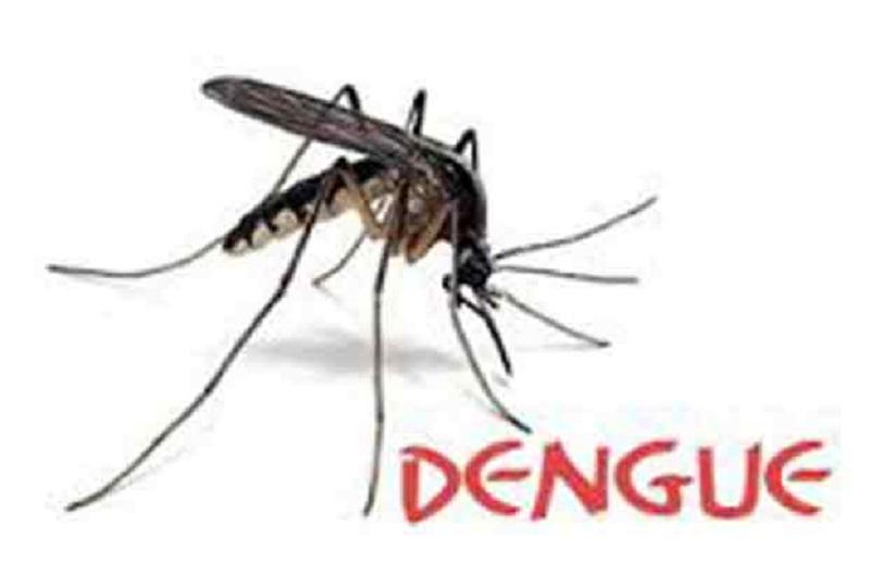 home remedy for dengue fever